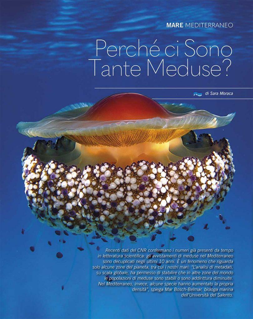 perchè ci sono tutte queste meduse? nautica febbraio 2019