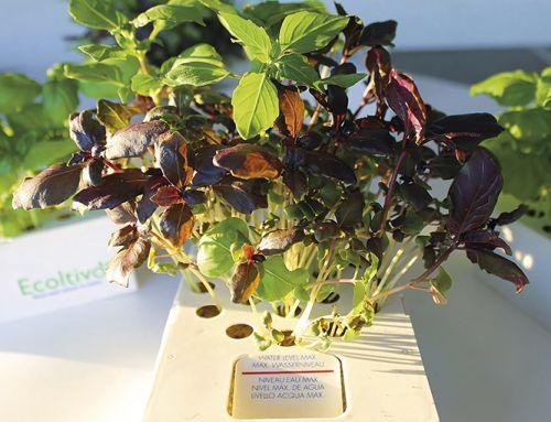 Ecoltivo: il modo semplice per avere aromi e insalate freschi in barca senza sporcare