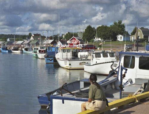Dall'aragosta alla lobster boat, storia e tradizioni di pesca