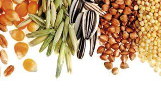 cereali-legumi