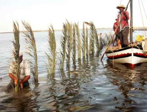 Pesca sostenibile, la Charfia patrimonio dell'Unesco